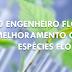 O ENGENHEIRO FLORESTAL NO MELHORAMENTO GENÉTICO DE ESPÉCIES FLORESTAIS