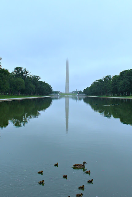 washington dc washington monument empty with ducks in the foreground