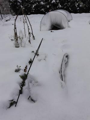 Orto biologico: la neve fa parte del ciclo