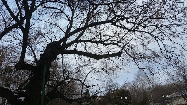 """גזע העץ חלול והוא נתמך ע""""י מוטות חיצוניים"""