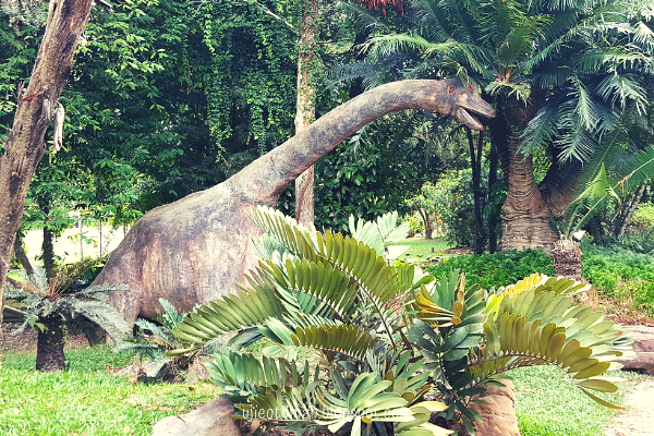 dinosaur di taman evolusi