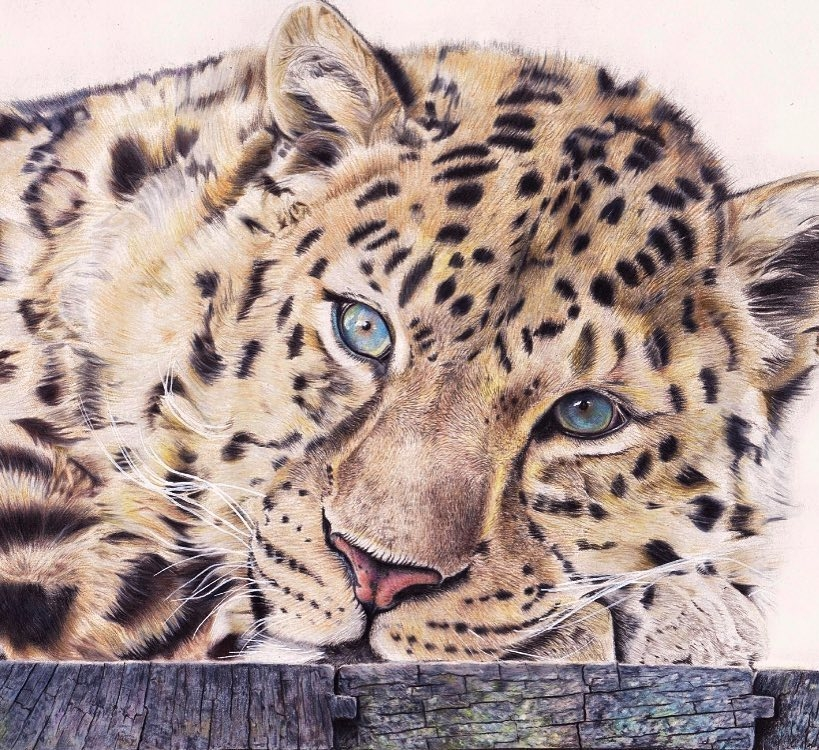 05-Liran-Vardiel-Animal-Drawings-using-Colored-Pencils-www-designstack-co