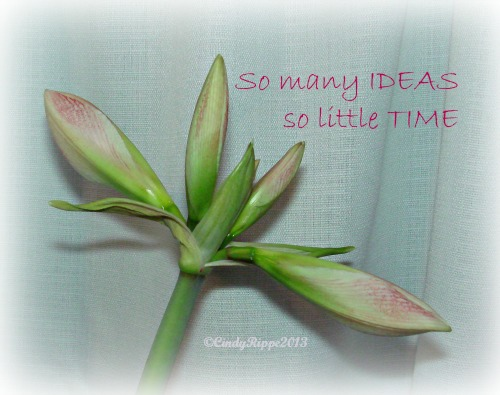 Amaryllis, amaryllis buds, Cindy Rippe, Ideas, Focus, Oprah Winfrey quote, business for artist