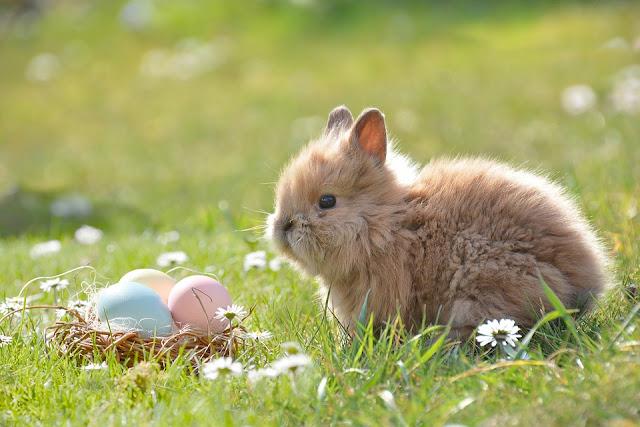Nos plus beaux souvenirs de Pâques!
