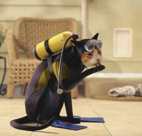 Cool Scuba Diving Cat Picture