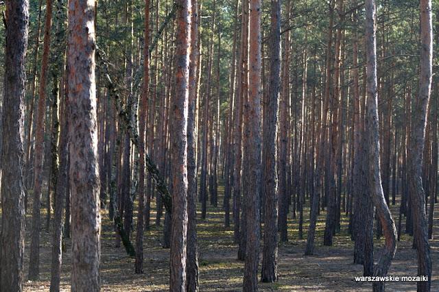 teren leśny Warszawa Marysin Wawerski Wawer Fort Wawer park