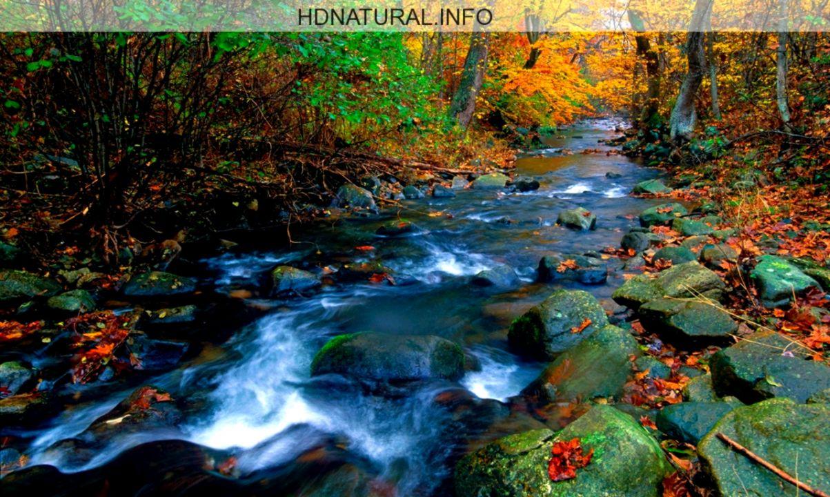 nature screensaver pictures wallpaper
