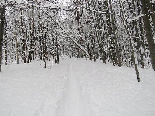 Las na stoku Magury Stuposiańskiej.