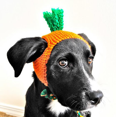 Carrot Costume for Dogs