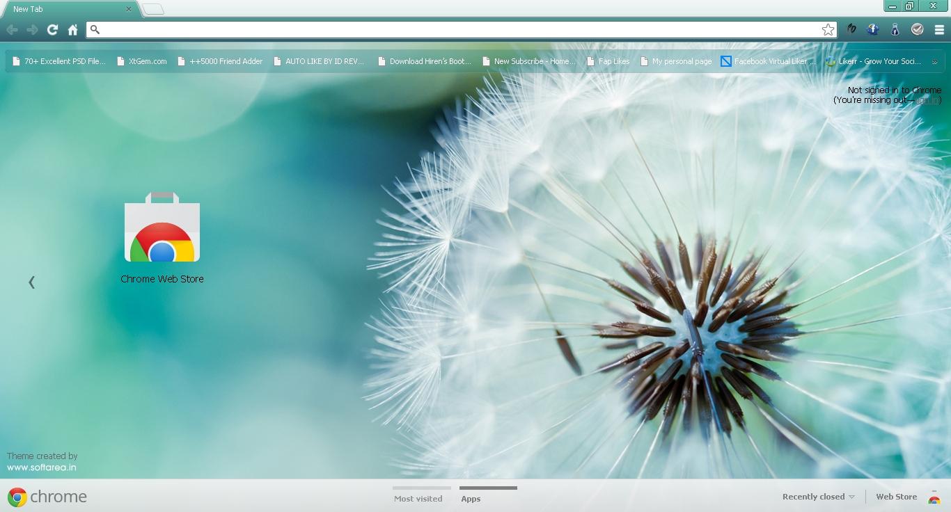 Macro Dandelion Google Chrome Theme - Softarea in