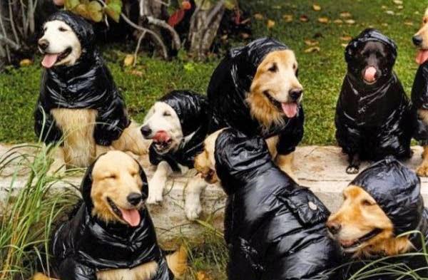 Perros labradores mojandose