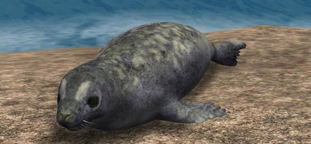 Imagen de foca del Caspio