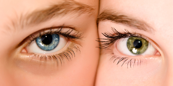 Vitamin A Kesehatan Mata Yang Terkandung Pada Bayam