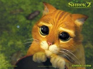 mengenal bahasa kucing dari gerak mata