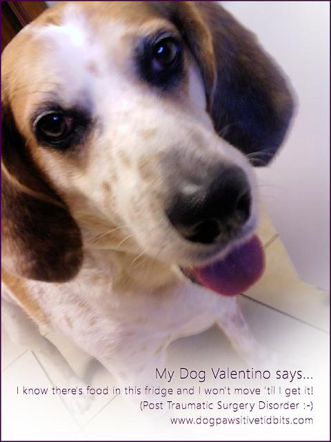 My Dog Valentino Post-Surgery