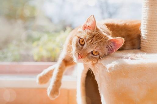 Jak pomóc kotu w trakcie upałów
