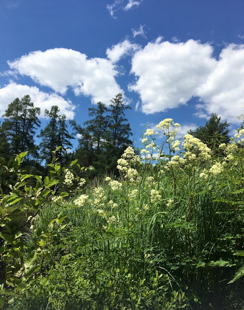 wild flowers and trees along the banks of the Bonnechere River