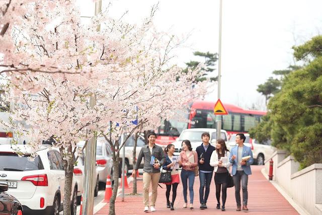 Quy định gia hạn visa đối với du học sinh Việt Nam tại Hàn Quốc