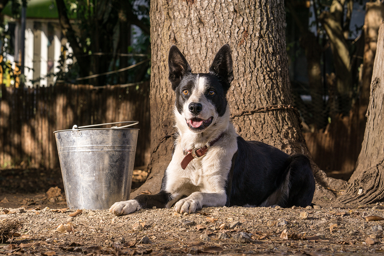 Backtrack Boys film - a dog smiles lying down next to a stainless steel bucket