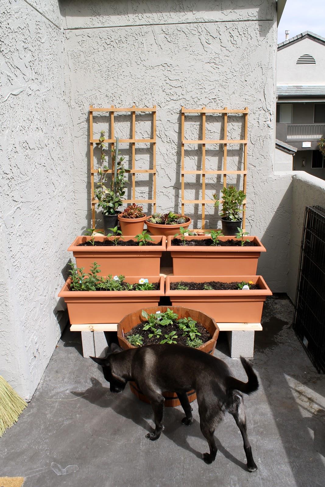 Container Garden Balcony – Thorplc Com