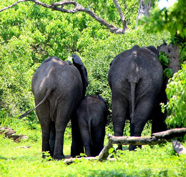 Elephants. Botswana. Chobe National Park. The Touristin. Dorothee Lefering