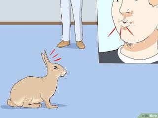 telinga kelinci berdiri
