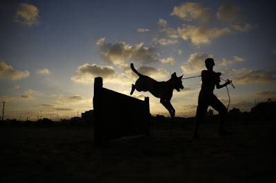 Stray dogs find shelter in battered Gaza