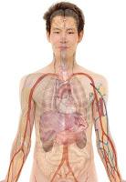 Pengertian, Perbedaan Sistem Saraf Dan Sistem Hormon