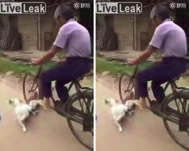 Hombre ve a dos perros enganchados y los atropella con su bicicleta