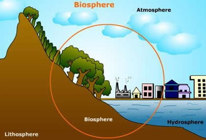 labelled diagram of water cycle msd wiring diagrams mopar plant life: biosphere concept