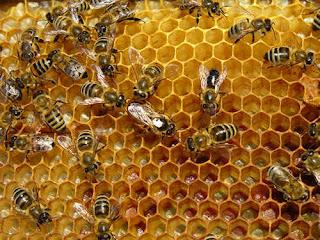 khasiat dan manfaat madu untuk kesehatan dan mengobati berbagai macam penyakit
