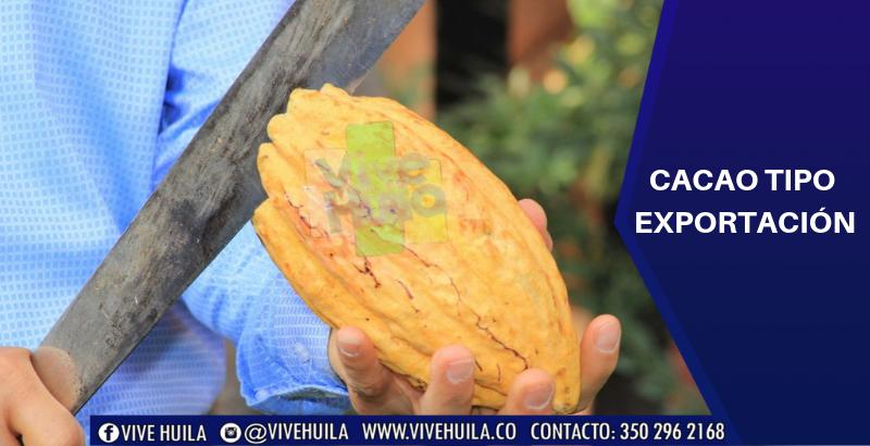 La industria del Cacao huilense con posibilidad de exportación ...