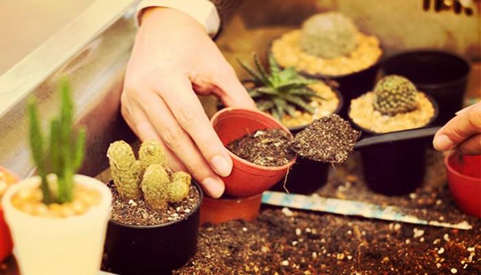 Como cuidar cactus