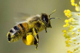 gambar lebah , hikmah dari lebah