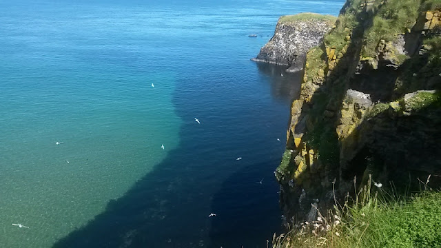Gulls over sea at Carrick-a-Rede