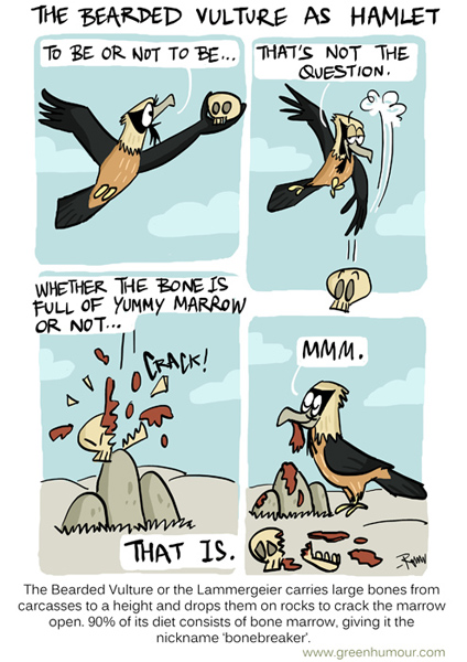 Green Humour The Bearded Vulture As Hamlet
