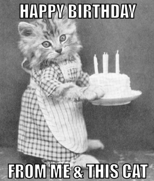 Cute Kitties With Cake Pictures