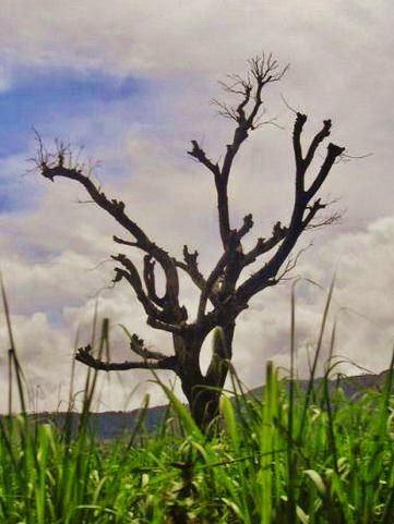 interesting-nude-tree
