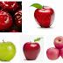 Cara Mudah Menanam Pohon Buah Apel Merah Dari Biji