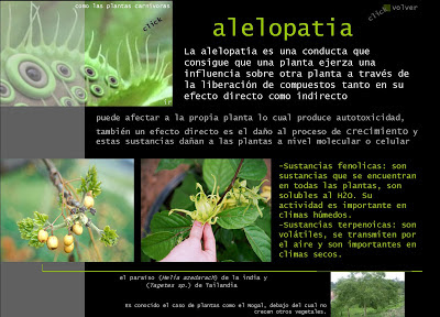 Calentamiento global alelopatia y plantas alelopaticas for Alelopatia en hortalizas