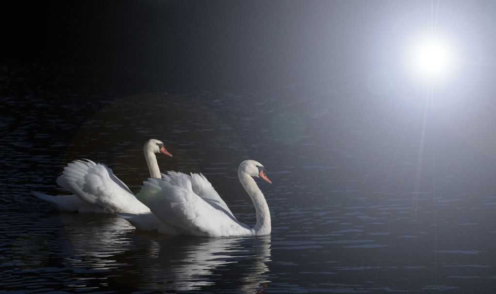 Pair of Mute Swans by Bahman Farzad