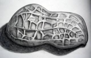 Sketsa Kacang Tanah
