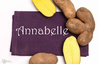 Kartoffel Annabelle