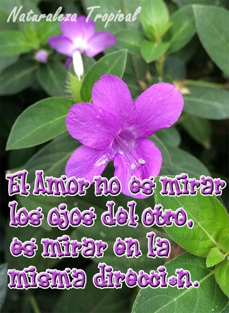 El Amor no es mirar los ojos del otro, es mirar en la misma dirección.