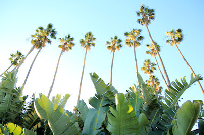 Palms in Palisades Park Santa Monica California - Photo by Mademoiselle Mermaid