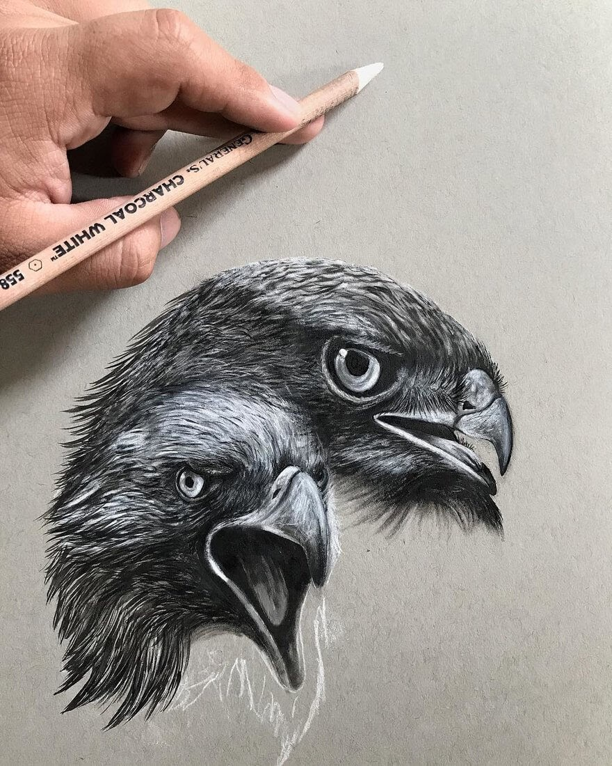 08-Birds-of-Prey-Jonathan-Martinez-Animal-Drawings-with-Colored-Pencils-www-designstack-co