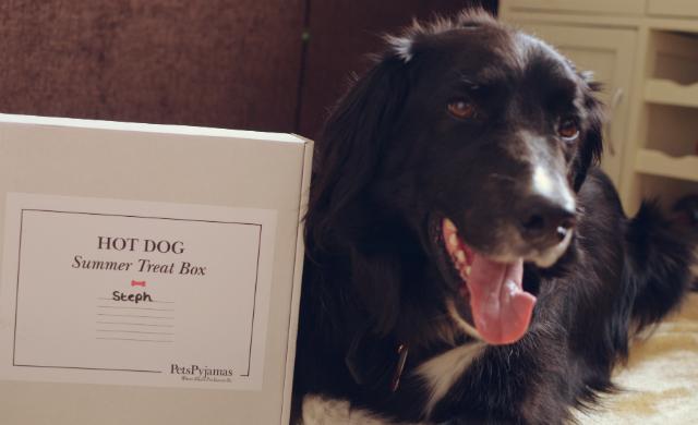 canine-treat-box