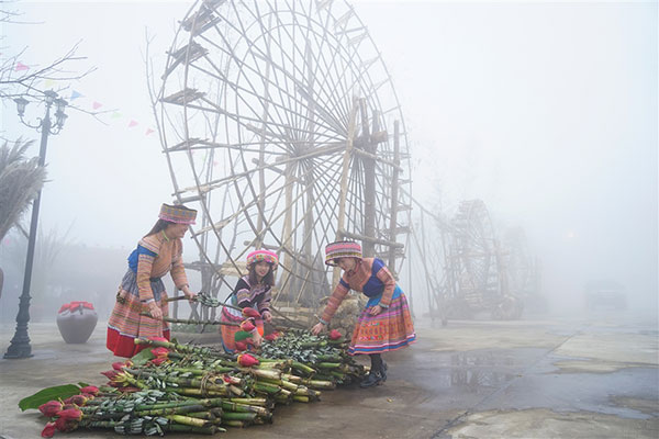 Northwestern culture, native flowers to be showcased at event in Sapa