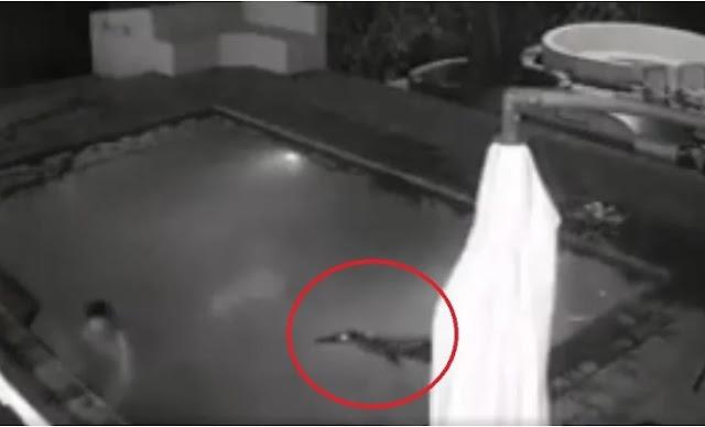 Man leaves girlfriend behind during crocodile attack
