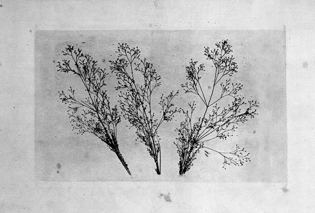 """Photoglyptic Gravure"", cca. 1860"